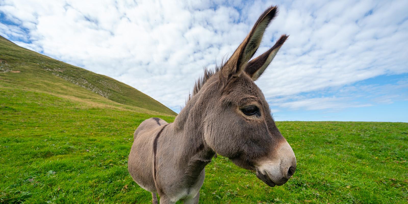 Donkey on a hill